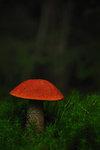 Lyser i den mörka skogen
