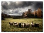 En höstdag i fårhagen