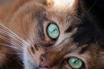 Random cat#1