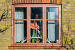 I grannens fönster