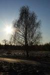 Naket träd