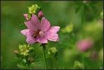 Blommor & Bin
