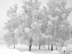 Trädens vinterskrud