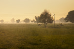 084 sunrise in rajastan.jpg