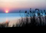 Solnedgång över vassen