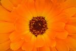 Orange natur