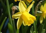 Våren