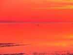Grå häger under blå horisont i rödgult färghav II