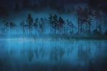 Dimmornas skog