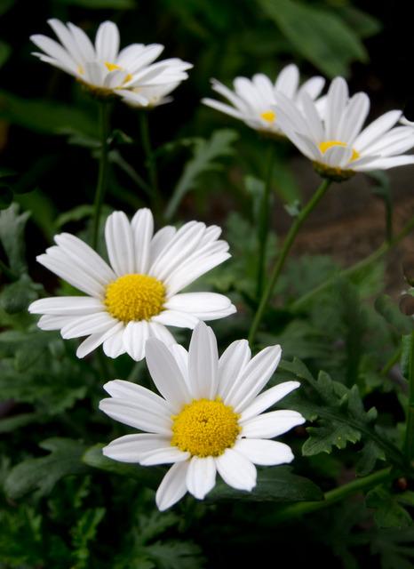 Midsommardags blomster i trädgården