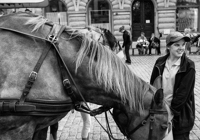 Hästtjejen