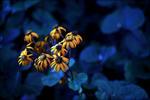 Gula blommor mot blått