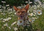 Vilken j-a massa blommor
