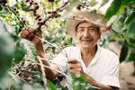 René Monroy, Las Delicias kaffegård i El Salvador