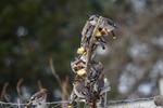 En klump av svansar