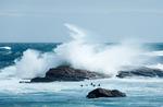 Cape Point - där Atlanten möter Indiska Oceanen