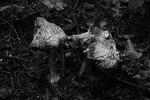 Mushroom decay