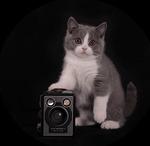 Kattfotografen