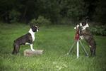 Hundfotografen