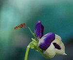 Bi och sommar