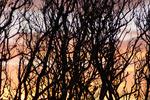 Solnedgång genom buskage