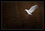 Landing in the golden sea