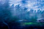 Den blå sagoskogen runt den lilla stugan