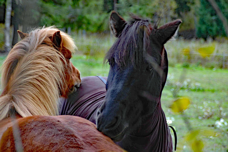 mg0011054 Kramgoa hästar kopiera 2