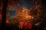 Liseberg träd 2
