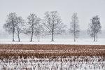 En vinterdag på åkern