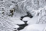 Vinterbäck I