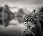 Katt i sin natur