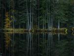 skogstjärnen