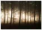 God morgon bokskogen!