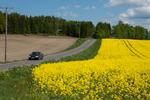 Rapsfält i Sörmland