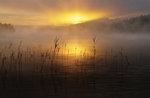 Tidig morgon vid Västersvan