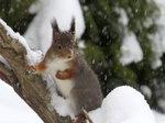 det snöar på Korre