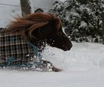 Snöskor köpes