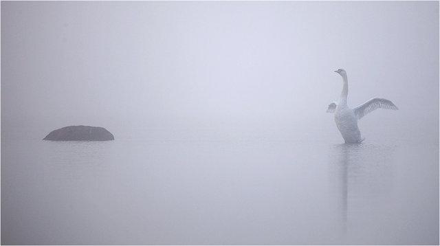 Svandans i dimman