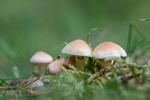 Besök i svamparnas värld 2