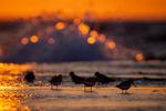 Vadare i bubblande solnedgång