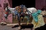 Garveriet i Marrakesh - åsnekärra för avfallstransport