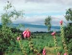 Blomma i Skottland