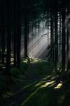 I trollskogens magi