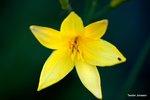 Blomma med kryp