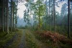 En skön promenad i skogen