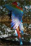 Papaginho