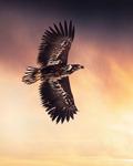 Örnen