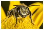 Det lilla biet 2