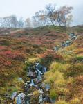 Höst i Femundsmarka nationalpark